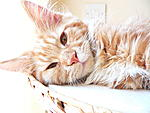 Lazy cat! by RiaBoo