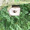 squirell in the bird house