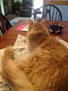 Ginger sitting on my morning paper