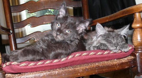 Larry And Monty Share The Rocking Chair